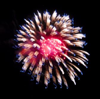 130101 FireworkThumbnail