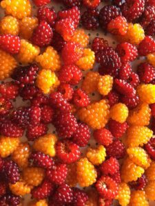 AllSalmonberries