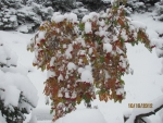 View the album Seldovia Fall 2012 Part 2