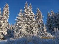 13_121225_ChristmasDayInSeldovia-jfchissus_IMG_5414.jpg
