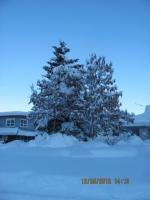 56_121225_ChristmasDayInSeldovia-jfchissus_IMG_5480.jpg